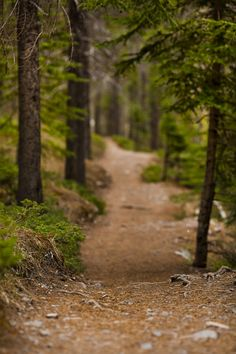Take a walk through Grassi Lake Trails in Canmore, Alberta #Canmore