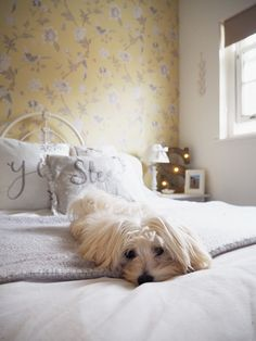 Vintage style master bedroom in yellow and grey colours, with French chic bedstead and wallpaper feature wall. Maltese terrier optional!