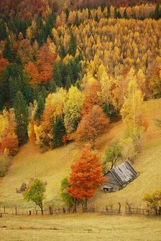 Cabin in the Autumn Forest