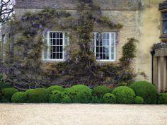 cloud pruned topiary balls & wisteria