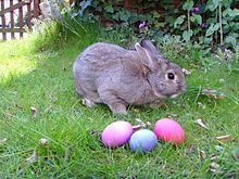 Sexy male easter bunny
