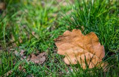 Beautiful shots in autumn leaf in grass  size; 5724 x 3746  source; www.freeimages.com