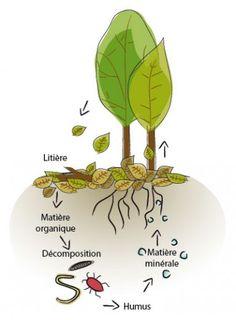 agroforesterie, Hazebrouck, agriculture