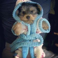 #Repost @pawfectyorkies This robe is sooo fluffy Im...