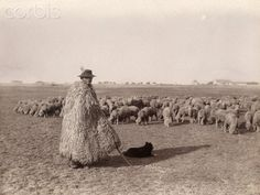 A shepherd in a sheepskin coat tends to a flock of sheep in a field. Drawing Prompt, Sheep Farm, Sheepskin Coat, Old Photography, Budapest Hungary, Flocking, Photo Library, Farming, Vector Art