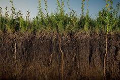 Органическое земледелие, пермакультура: 5 причин использования сидератов