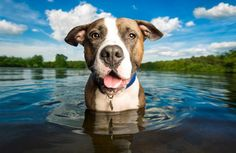 How Dog Photographer Kaylee Greer turned her passion for pups into a full-time paying gig!