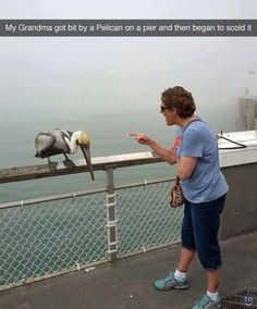 RuinMyWeek.com #funny #pics #photos #pictures #humor #comedy #animal #animals #pelican