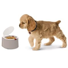 Could use this right now with the new puppy! The Microchip Activated Pet Feeder Genius! Pet wears a microchip which automatically opens the bowl. Other pets cant get into it. Dog Feeder Automatic, Cat Feeder, Cool Inventions, Mundo Animal, Pet Bowls, Pet Collars, New Puppy, Dog Care, Fur Babies