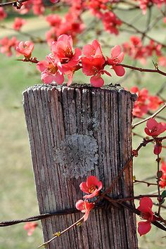 Farmhouse Front Yard Fence and Modern Fence Landscaping. Country Fences, Rustic Fence, Country Roads, Front Yard Fence, Fence Gate, Horse Fence, Brick Fence, Small Fence, Pallet Fence