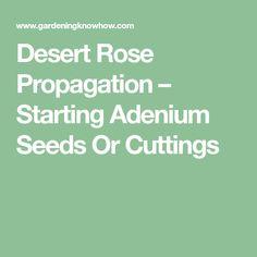 3973ae370e0c5 Desert Rose Propagation – Starting Adenium Seeds Or Cuttings