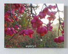 Weiteres - Pfaffenhütchen - ein Designerstück von gimoostyle bei DaWanda, Sträucher, FOTO von GIMOOTO, Motiv gedruckt auf Satin Canvas Leinwand