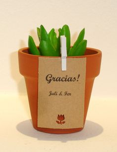 Suculentas souvenir con mini broche Succulent Favors, Succulents Diy, Wedding Flavors, Wedding Tags, Wood Planters, Amazing Weddings, Cactus Y Suculentas, First Holy Communion, My Flower
