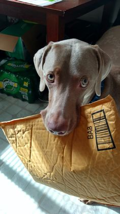 This is so typically Weim!