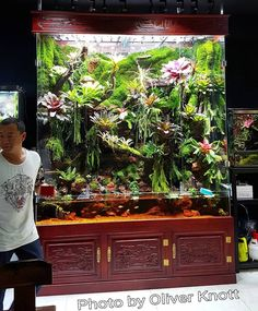 tunning Paludarium from Tianjin/China Including Butterflies