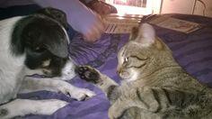 Le cronache animali: Curiosità - Il linguaggio della coda dei gatti