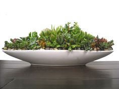 "Multi-tone Succulent Mix 21"" Boat-Shaped White Ceramic Modern Minimalist Pot Large Centerpiece Dish Garden Gift Planter"