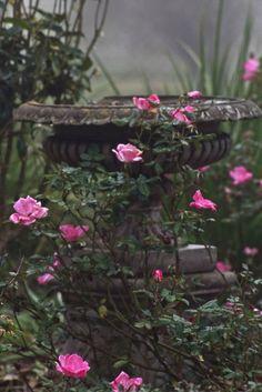 .Wonderful stone garden urn and roses ...