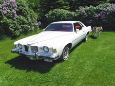 1973 Pontiac Grand Prix (and doggie!)