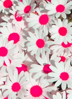 My favorite flower along with Gerbera Daisies. Cute Backgrounds, Cute Wallpapers, Wallpaper Backgrounds, Daisy Wallpaper, Phone Backgrounds, Teen Wallpaper, White Wallpaper, Iphone Wallpapers, My Flower