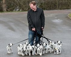 18 Dalmatian Puppies - The world's largest litter of dalmatian puppies!