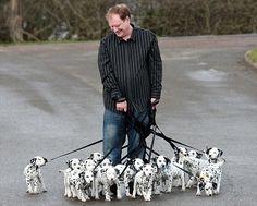 18-dalmatian-puppies-.jpg 468×375 pixels