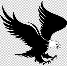 This PNG image was uploaded on January pm by user: and is about Animals, Bald Eagle, Beak, Bird, Bird Of Prey. Studio Background Images, Blue Background Images, Blurred Background, Maa Wallpaper, Heart Wallpaper, Eagle Artwork, Eagle Icon, Png Images For Editing, Eagle Silhouette