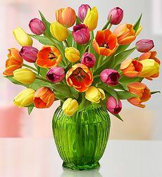 Un ramo de tulipanes te ayudará a ganar el perdón de esa persona que tanto amas y sin querer heriste.