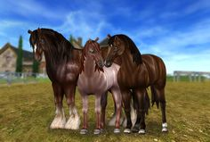Gorgeous New Horse Colors & Brand New Clothes!