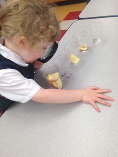 Expérience scientifique avec les parties de la pomme  Classe de maternelle
