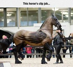 Majestic Clip Job