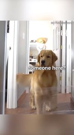 Funny Animal Jokes, Funny Dog Memes, Funny Dog Videos, Funny Animal Pictures, Cute Funny Dogs, Cute Funny Animals, Chien Golden Retriever, Cute Dogs And Puppies, Funny Puppies