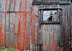 Featured Art - A red vertical garden  by Sarah  King