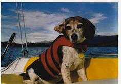 """So you have booked your sailing vacation but you do not know what to do with your pet, and you are probably asking """"Can I take my dog aboard charter yacht?"""" The answer depends upon your charter agency and you have to check that in advance but in most cases, the answer is yes."""
