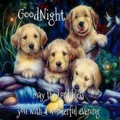 Wonderful Evening Blessing evening good night good night pictures good night images good night sayings Good Night Beautiful, Cute Good Night, Good Night Everyone, Good Night Sweet Dreams, Good Night Image, Good Night Quotes, Good Morning Good Night, Night Time, Good Night Greetings