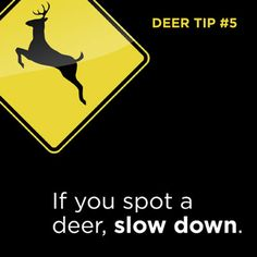 Tip #5: During the fall, more deer roam rural areas and roads with high speed limits. Find out more ways to help stay safe | onstarconnections.com | #deer #tips #driving #onstar