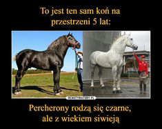 Demotywatory.pl Animals And Pets, Funny Animals, Cute Animals, Horse Photos, Horse Pictures, Old Memes, Call Art, Cool Inventions, Beautiful Stories
