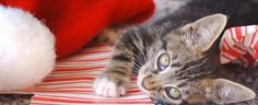 Keeping Your Cat Safe During the Winter Holidays