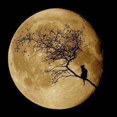 Harvest Moon Kitty