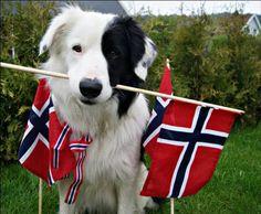 Constitution Day, Lapland Finland, Norway, Future, Future Tense
