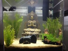 My Buddha Zen AquariumClick the link now to find the center in you with our amazing selections of items ranging from yoga apparel to meditation space decor! Freshwater Aquarium Shrimp, Tropical Freshwater Fish, Tropical Fish, Betta Aquarium, Fish Aquariums, Cool Fish Tank Decorations, Fish Tank Themes, Cool Fish Tanks, Amazing Aquariums