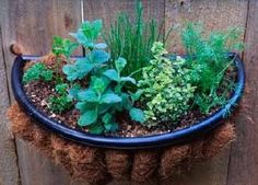 Outdoor herb gardens in separate containers are a great idea.  I have a large herb garden container just outside the door from my kitchen on the patio.