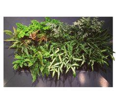 Decorative Plant Wall U0026 Indoor Vertical Garden | Suite Plants Gallery