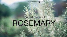 Magical Recipies Online | Herbal Magic of Rosemary