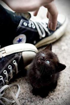 Cute black kitten by reba