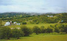 The 8th day creation, aka Harmony Hollow Orchards, Front Royal, Va.