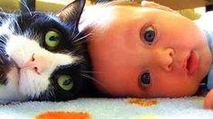 kedi ve bebek videoları cute cat  and babies videos