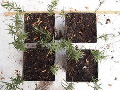 A Gardener's Notebook April 2013 Update   A Gardeners Notebook with Douglas E. Welch