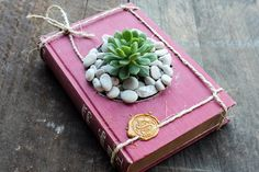 Hey, I found this really awesome Etsy listing at https://www.etsy.com/au/listing/269625020/succulent-planter-succulent-book-planter