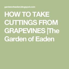 HOW TO TAKE CUTTINGS FROM GRAPEVINES |The Garden of Eaden